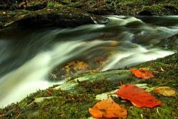 Glen Helen, Autumn