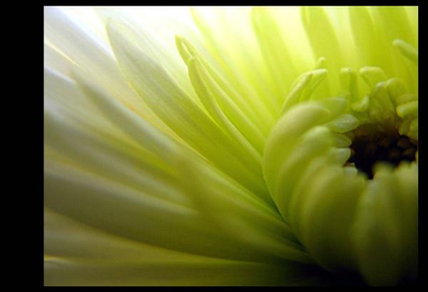 Flower Power. by jimbo75