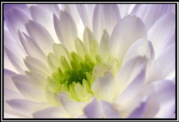 Flower Power 2 by jimbo75
