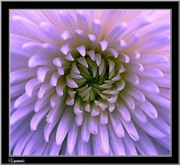 Inside the flower......