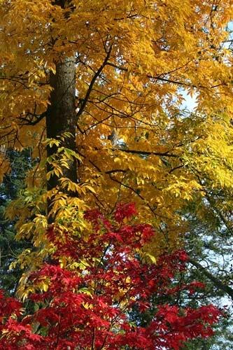 Autumn by Pixsie