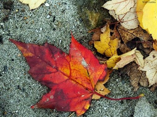 autumn show by Zorrito