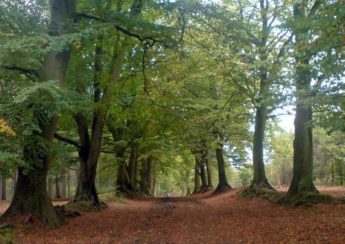 autumn avenue by ESP