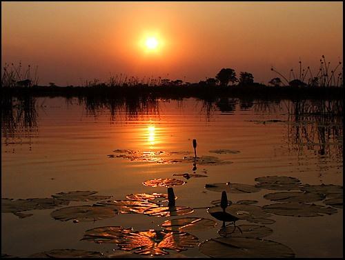 Delta Sunset by michellec