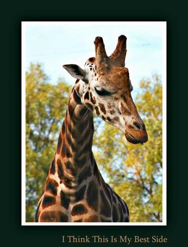 Giraffe by vinyl2godave