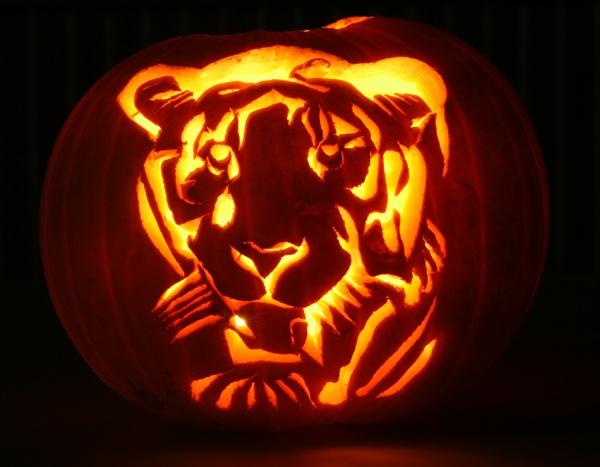 tiger pumpkin by petegaylard