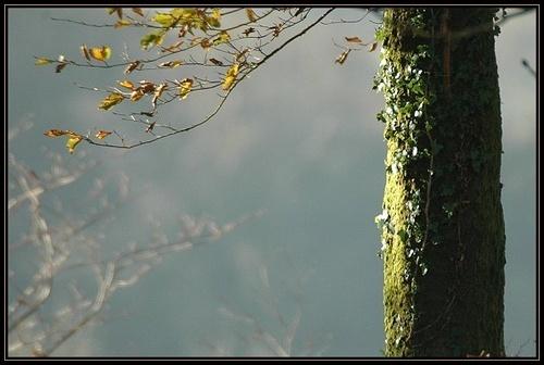 Autumn Sun by the kite man