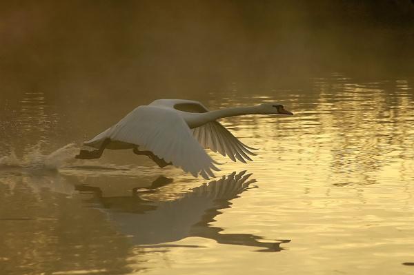 Early Morning Flight by faulknerstv