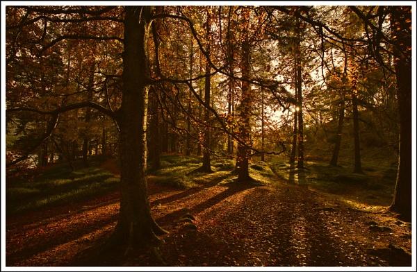 Rothiemurchus... by Scottishlandscapes