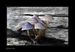 Fungi ruins