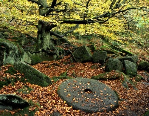 Padley autumn by Falconer