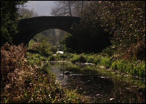 Stroudwater Canal by Jon_Iliffe