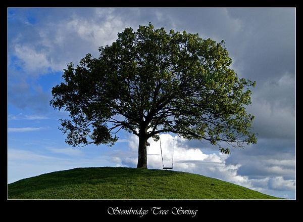 Stembridge Tree Swing by DiegoDesigns