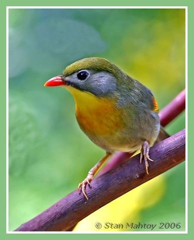 A Robin by alpha788