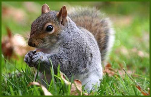 Nuts by Gaz_H