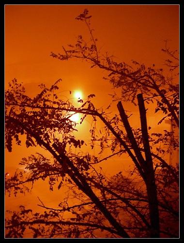 Fog by wakima