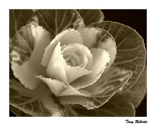 Flora 32 by troberts