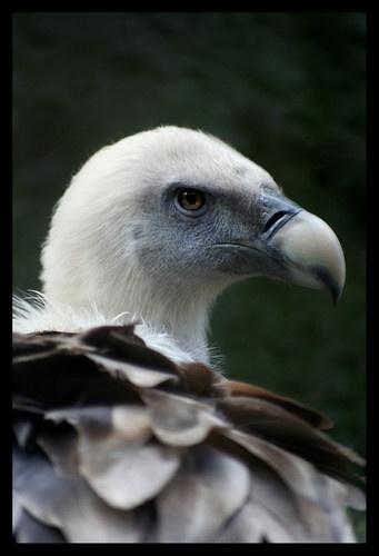 Bird of Prey. by becca_cusworth