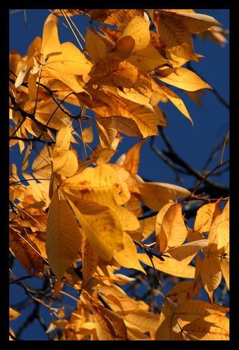 Farewell Fall by becca_cusworth