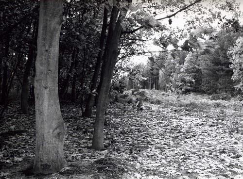 A walk in the wood by mollye