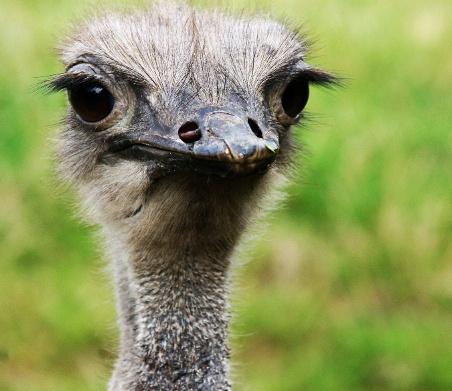 Emu by Anouska