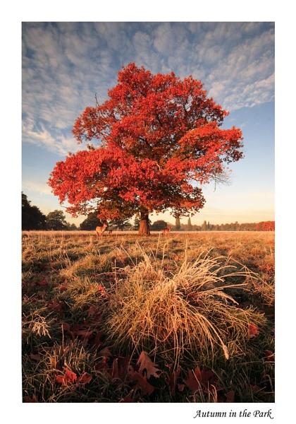 Autumn in the Park by itsasetamendi