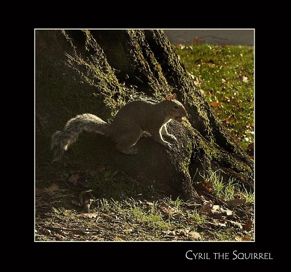 The Squirrel! by ruralscotland