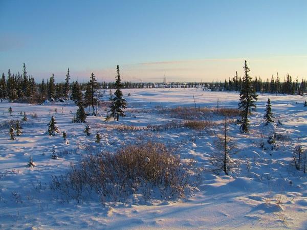 The Siberian Waste by Bogwoppett