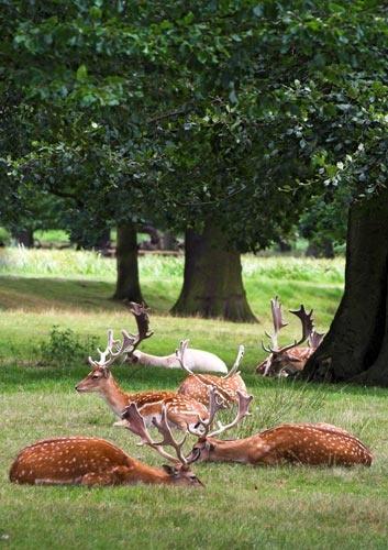 Oh deer by wbk666