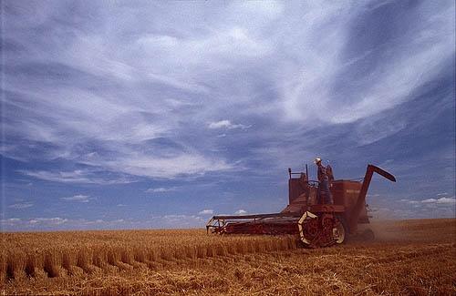 Colorado Harvest Skies by sjatkinson