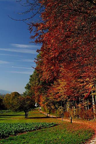 Leafy Path. by SimPick
