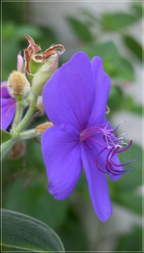 violet by vonny