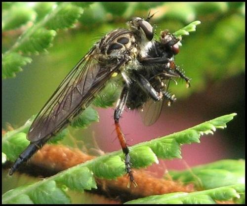 Bug Eat Bug. by Gecko