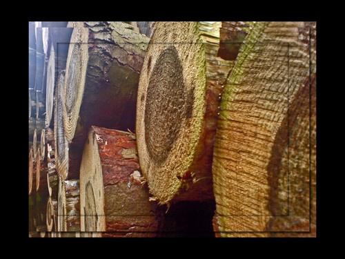 lots of logs by ESP