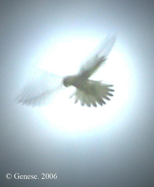 Night Hawk by Blueprint