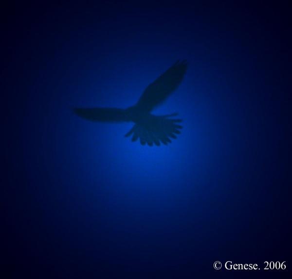 Night Hawk 2 by Blueprint