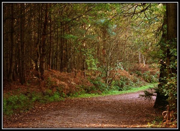 Autumn Woods by Peter_Farrell