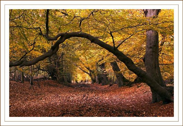 Autumn by Carol_f