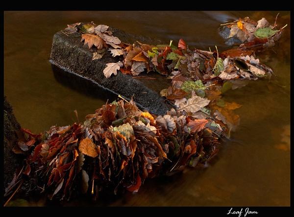 Leaf Jam by martin.w