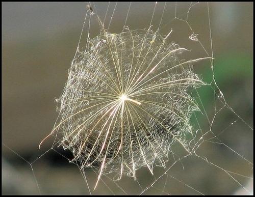 Fairy Web by Gecko