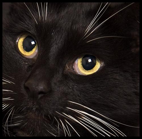 feline by Scritti
