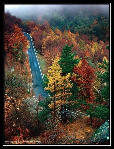 Foggy Autumn Road. Near to Avigliana, Piedmont, Italy. by paolodefaveri