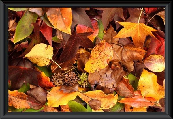 Autumn Leaves on Canopy Floor by wayfarer