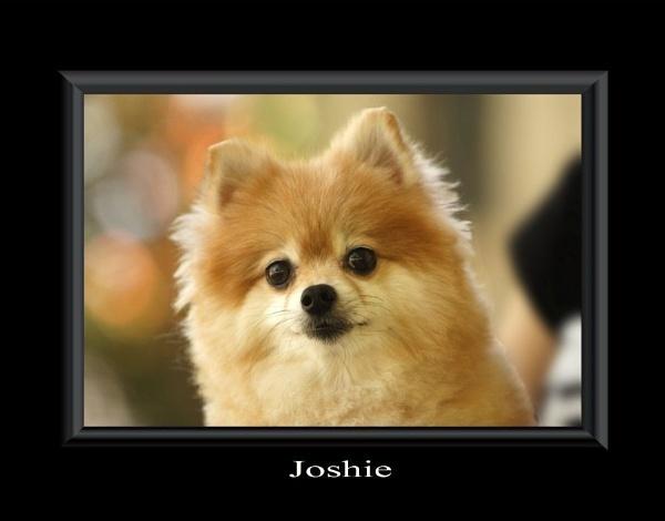 Joshie by wayfarer