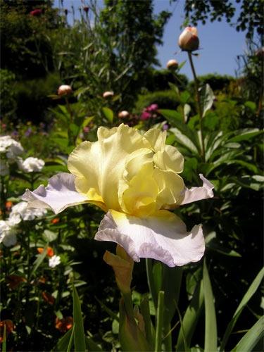 In Monet\'s garden by walsh