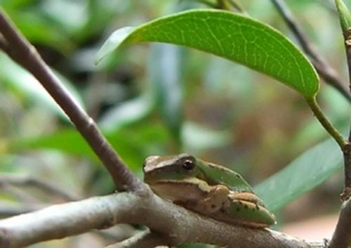 Froggy by nitin_samani