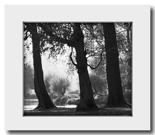 Trees by grumpalot