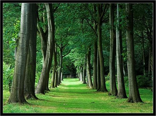 The Avenue by Hawkgenes