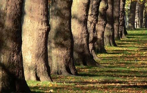 Tree by KarlmarxEra