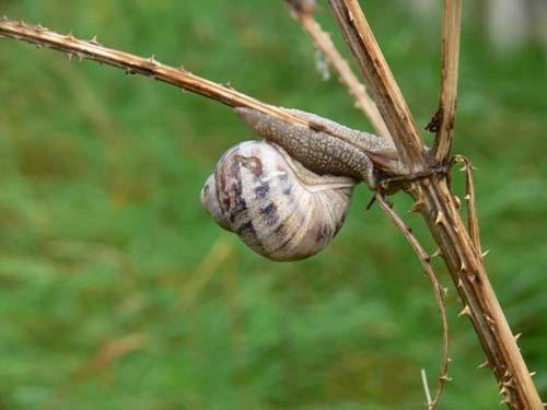 Throny snail by KarlmarxEra